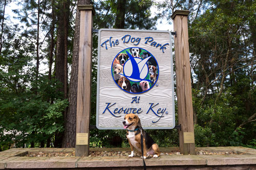 Dog at the Dog Park at Keowee Key